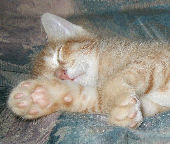 Fyodor [4]  kitten