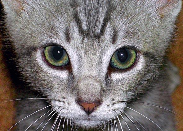 Scout [redux]  kitten