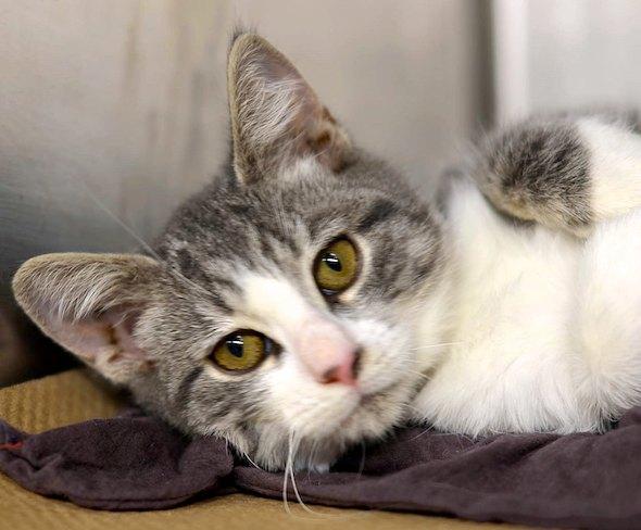 Kayla kitten