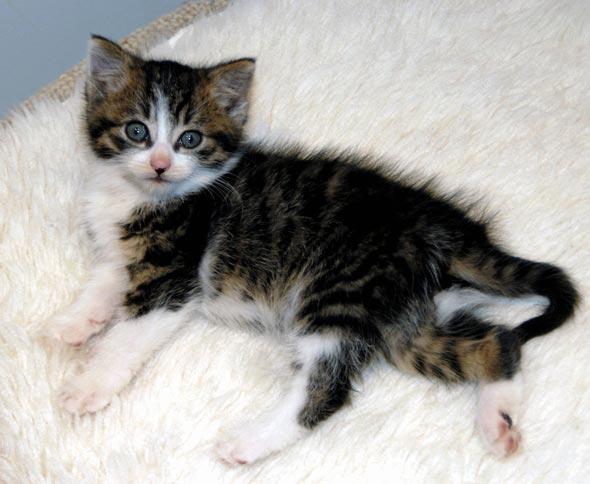Momo [redux] kitten