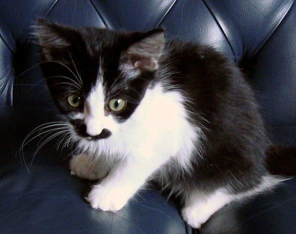 Rosie [5] kitten