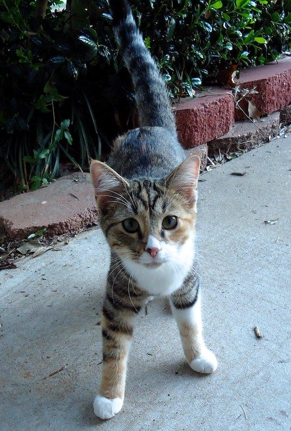 Nadine [4] kitten