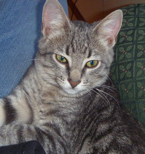 Martin [3] kitten