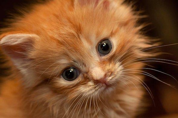 Paddy kitten
