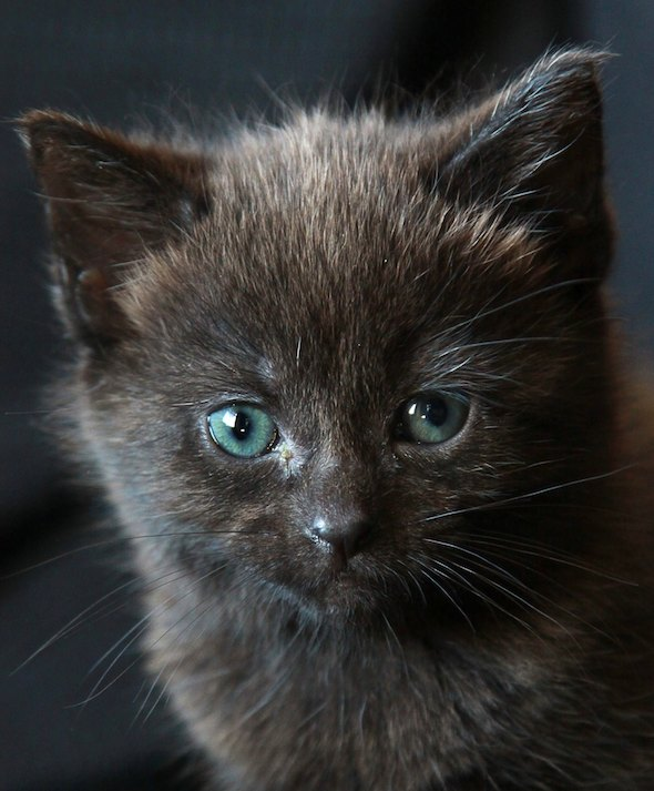Bella  kitten
