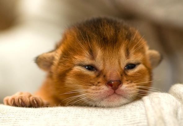 Pippi's Boy Perpetual Motion [redux] kitten