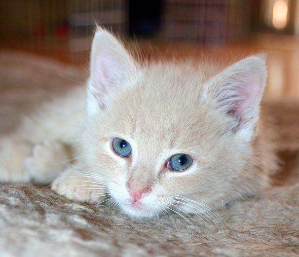 Four Orange Fosters: Dublin [4]  kitten