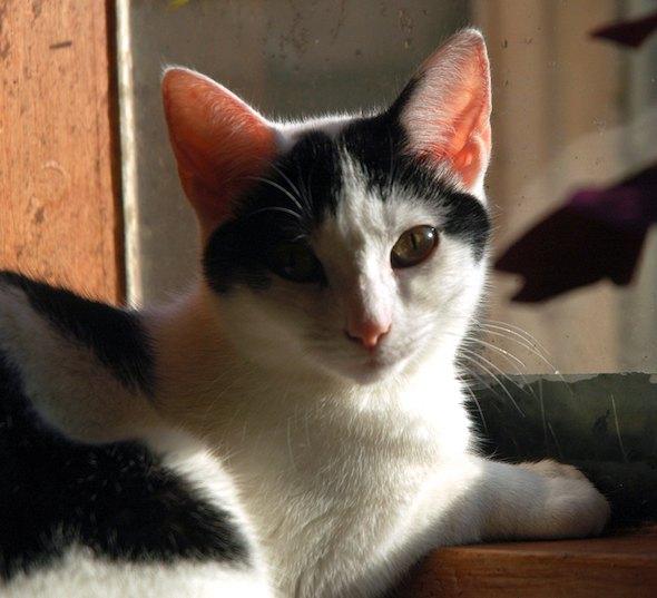 Penny-Plops! kitten