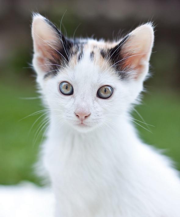 Nala [redux] kitten