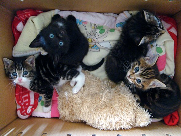 Smoggy's Friends: Lou Lou, Jasmin, Pickles & Hubert  kitten