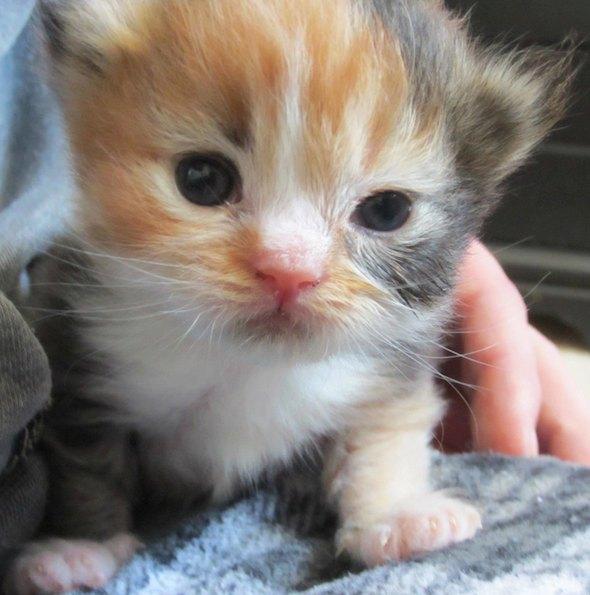 Lunchbox Loki [5] kitten