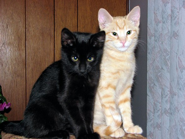 Sebastion and Tabitha  kitten