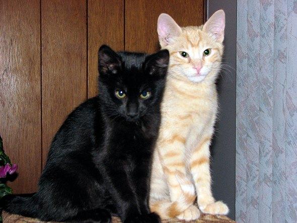 Sebastion and Tabitha [5] kitten