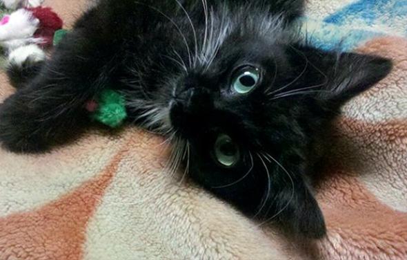 Diesel [redux]  kitten