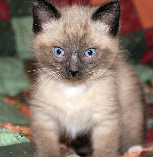 Omashu [redux]  kitten