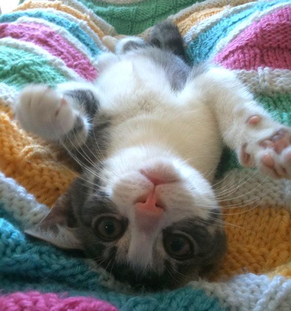 Noah [redux]  kitten