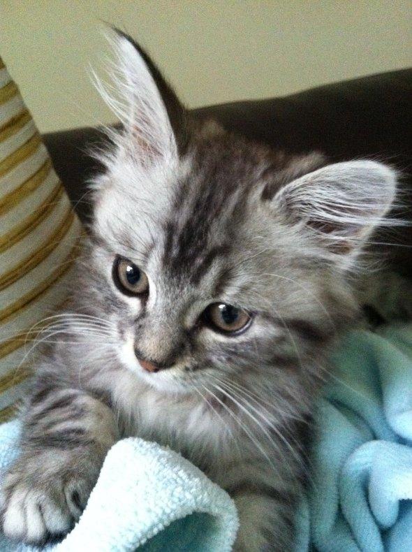 Monty [5] kitten