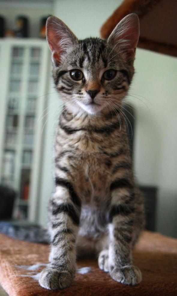 Storen [redux]  kitten