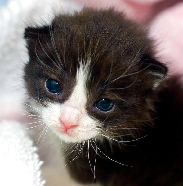 Choo Choo [redux]  kitten