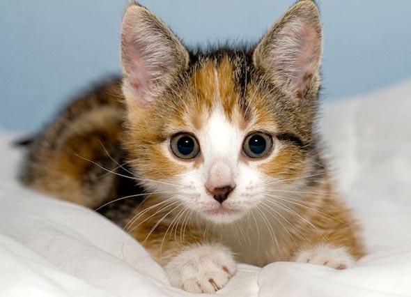 Purdey [redux]  kitten