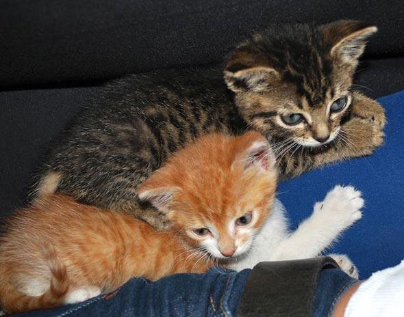 Mono and Niche [redux] kitten