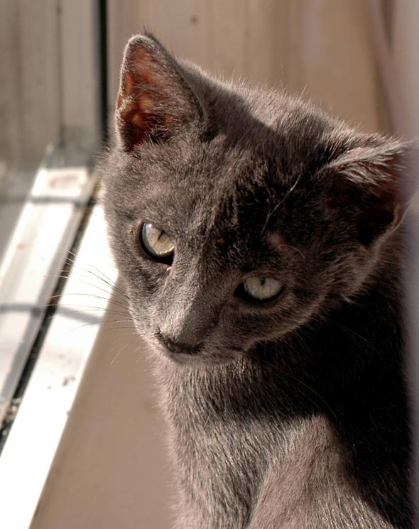 Grant [redux] kitten
