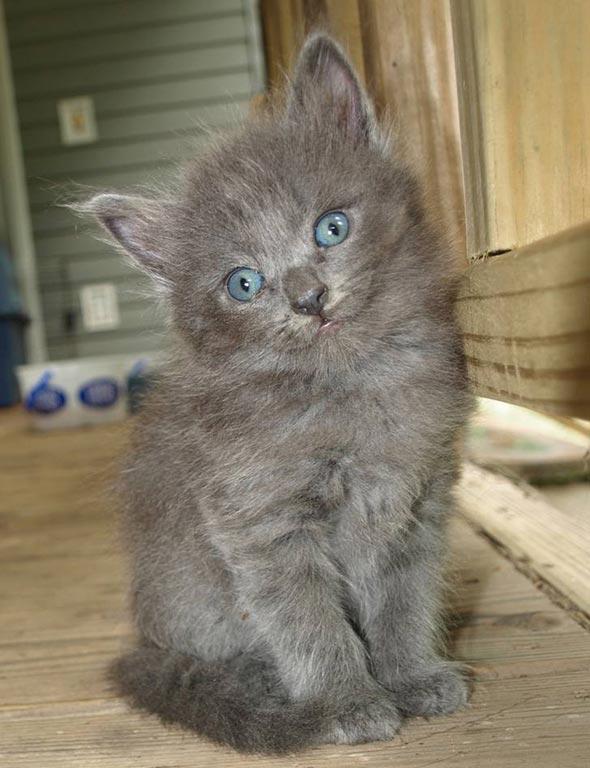 Buddy aka Tide [redux] kitten