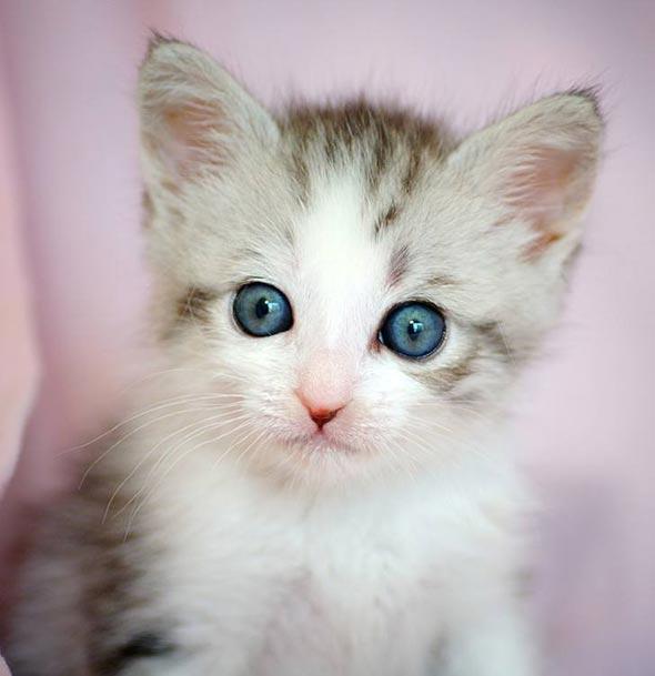 KitKat [redux]  kitten