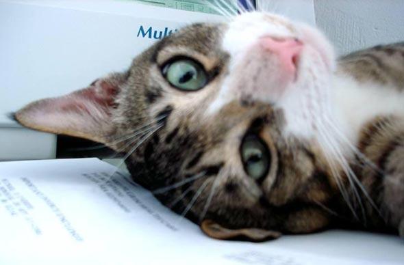 Maxwell  kitten