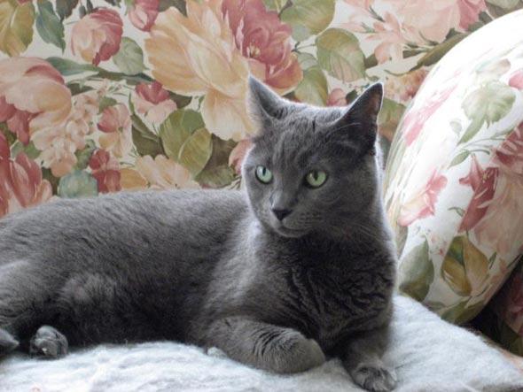 Lily  kitten