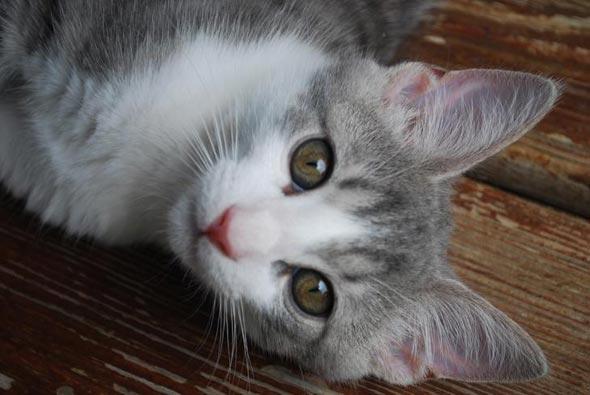 Echo  kitten