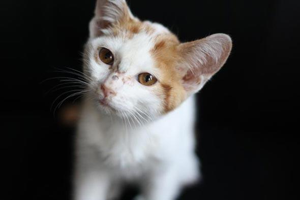 Fable  kitten