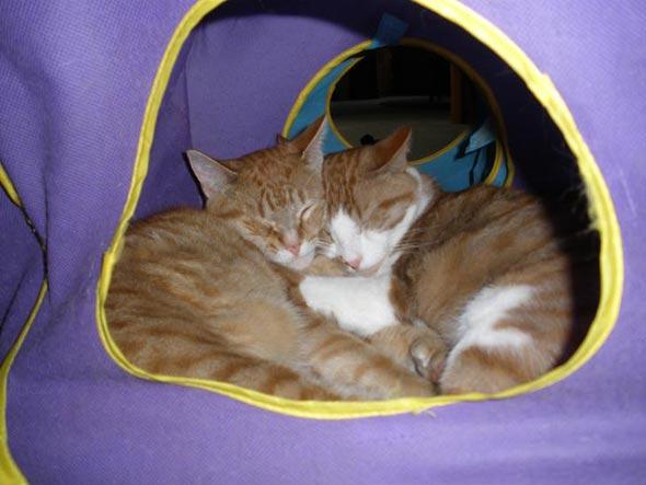 Colby Jack & Beannie  kitten