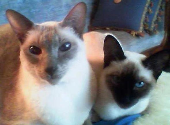 Sonny Boy and Madam Alexander's Beanie Baby  kitten