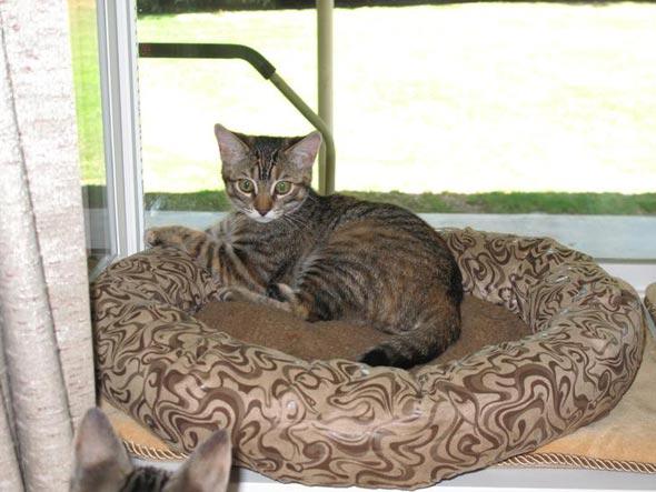 Shellie  kitten
