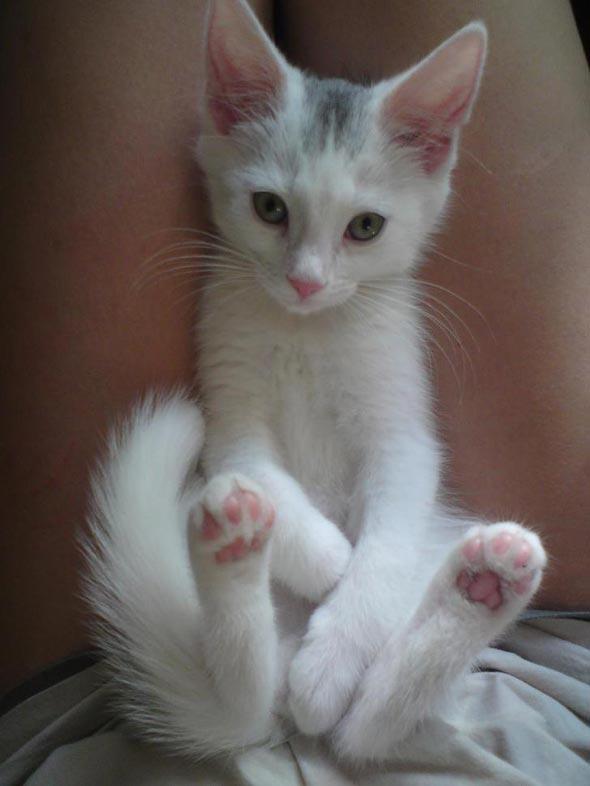 Ulf  kitten