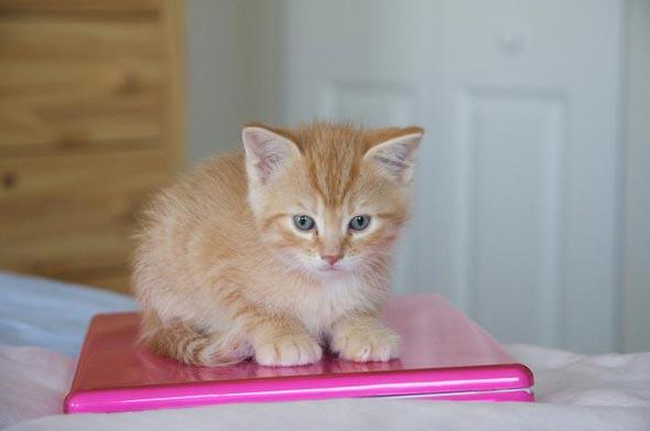 Watson  kitten