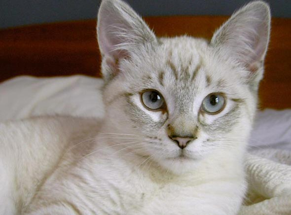 Sofie  kitten