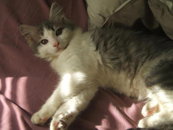 Pablo  kitten