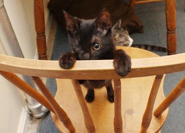 Iris  kitten