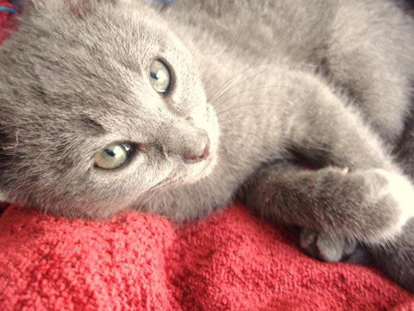 Cassie  kitten