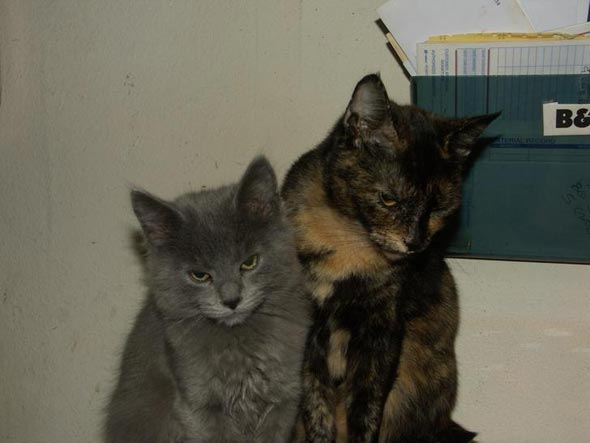 patches kittens part 1 teeny  kitten