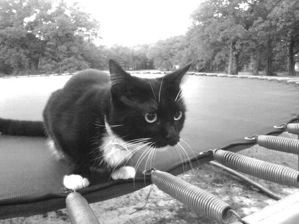 JONAS  kitten