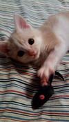 Kitten Comment Thumbnail