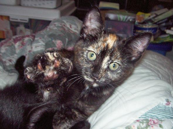 Mo  kitten