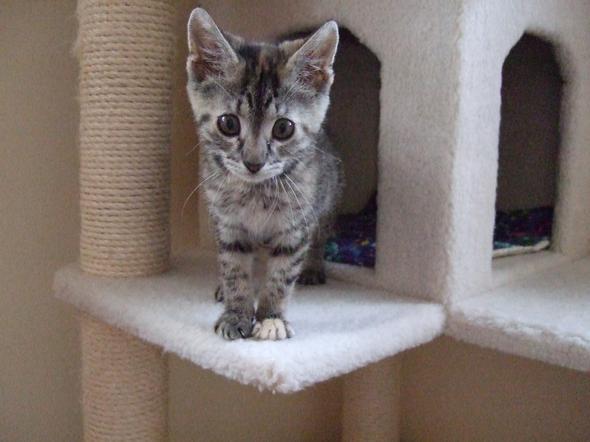 Jacy  kitten
