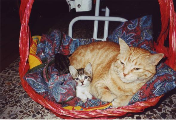 CAROTINO E DAISY cuoricini preferiti  kitten