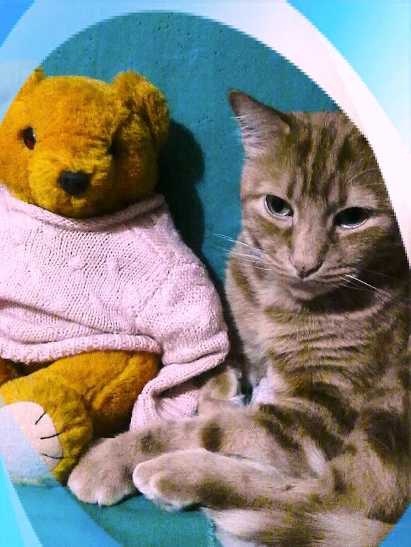 Rochi  kitten