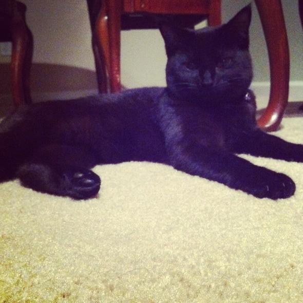 Keke  kitten