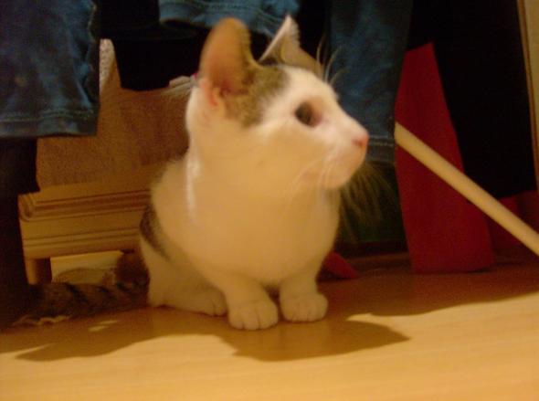 Crunni  kitten